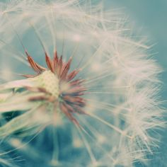 What is a weed? A plant whose virtues have not yet been discovered. Ralph Waldo Emerson