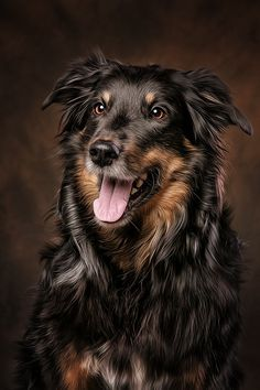 "00 / Photo ""the best friend"" by Danny Block / Foto ""der beste Freund"" von Danny Block Dog Photos, Dog Pictures, Funny Animal Pictures, Animal Paintings, Animal Drawings, Dog Drawings, Beautiful Dogs, Animals Beautiful, Happy Animals"