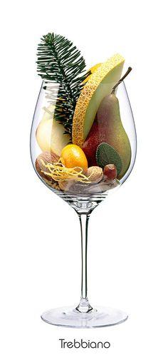 TREBBIANO Apple, almond, pear, walnut, lemon (peel), melon, sage, pine branch, oyster shell (dried)