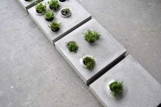 Urban growth series of paving stones that host vegetation, by allowing flexible customization and integration of greenery on the paved urban floor. Grey to Green // Caroline Brahme Paving Slabs, Concrete Pavers, Concrete Art, Concrete Projects, Paving Stones, Concrete Design, Gravel Patio, Concrete Blocks, Concrete Plant Pots