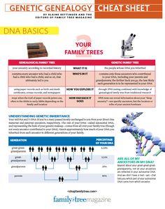 Genetic Genealogy Cheat Sheet   ShopFamilyTree