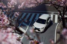 Cherry blossom... lexus NX