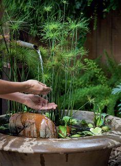 Plantas reconectam os moradores desta casa à natureza - Casa