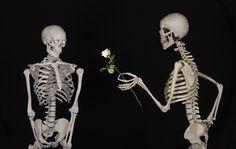 Esquelético, Flor, Felicidades, Amistad, Amor