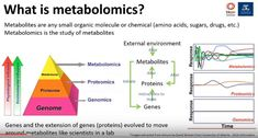 Many of the metabolomic anomalies found in ME/CFS are also found in sepsis and starvation. All show reductions in amino acids and lipids and increased levels of glucose. In both diseases proteins and lipids are used to maintain low energy levels while glucose is used for other matters – such as immune cell proliferation in sepsis. The inability to use glucose properly may be contributing to a kind of low-level chronic starvation of mitochondria.