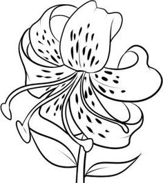 how to draw a tiger lily step 7