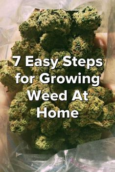 http://Papr.Club - Another cool link is ShipMyCarCheap.com  7 Easy Steps for Growing Weed At Home