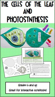 Printable cut and paste model of the leaf for your photosynthesis unit!