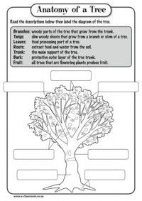 parts of a tree poster worksheet sb10351 sparklebox in english and norwegian. Black Bedroom Furniture Sets. Home Design Ideas