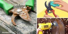 Πως θα Καθαρίσετε τα Σκουριασμένα Εργαλεία του Κήπου Garden Pests, Garden Tools, Pruning Shears, Good To Know, Decoupage, Home And Garden, Cleaning, Toys, Flowers