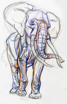 Elephant from Gary Geraths' Animal Drawing Class