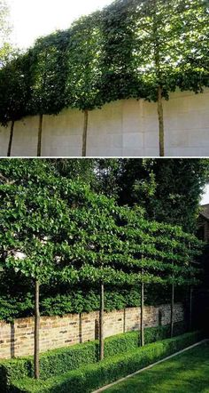 This wall of hedges is also great for extending the height of a fence.