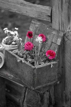 #selective color