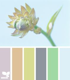 cool bloom.....my favorite color palette.....I like having a bunch of different colors to work with that wold all compliment grey.
