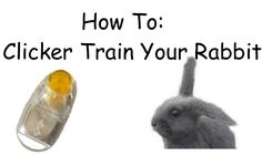 How to clicker train your rabbit-Training My bunny Storm