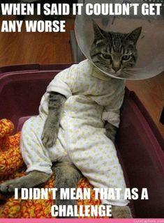 Funny cat memes #hilarious