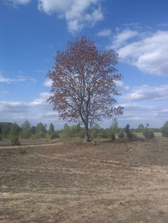 дерево моего детства