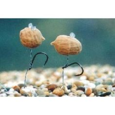 Pop Up Tigernuts - Imitation Bait made in Bedfordshire and supplied by Ringwood Tackle in Hampshire