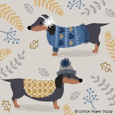 Dachshund in sweaters :)
