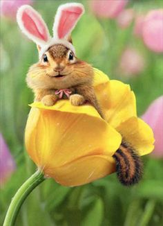 Details about Chipmunk Bunny In Tulip Avanti Easter Card – Greeting Card by Avanti Press - Cute Funny Animals, Funny Animal Pictures, Cute Baby Animals, Animals And Pets, Cute Pictures, Kids Animals, Baby Pictures, Beautiful Creatures, Animals Beautiful