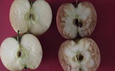 """Rosie Dutton, a teacher in Birmingham, U., has taken the """"it's what's on the inside that counts"""" anti-bullying lesson to the next level using two apples. Anti Bullying Lessons, Anti Bullying Week, Effects Of Bullying, Anti Bullying Activities, Apple Activities, Stop Bullying, Bullying At School, Primary Activities, Guidance Lessons"""