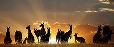 A voyage to Australia, Pacific - Sydney, Melbourne, Tasmania, Islands. Tasmania, Western Australia, Australia Travel, Visit Australia, Australia Pics, Australia Holidays, Australia Crafts, Australia Winter, Australia Tours