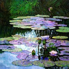 Lily Ponds On Pinterest Water Lilies Lily Pond And Ponds