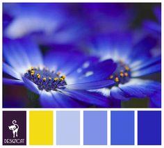 Blue Daisy: Royal Blue, Yellow - colour Inspiration pallet