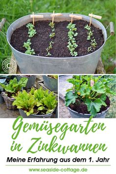 Gardening in the smallest space: my experience after the first year of moving vegetables in zinc panswww.de # vegetable garden garden … - All About Balcony Plants, Balcony Garden, Indoor Garden, Garden Pots, Indoor Plants, Garden Ideas, Vegetable Planters, Vegetable Garden, Growing Plants