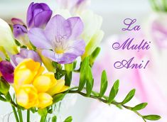 bunch of colorful freesia flowers by sarsmis, via Shutterstock Beautiful Flowers Pictures, Flower Pictures, Pretty Flowers, Happy Birthday Fun, Birthday Wishes, Freesia Flowers, 8 Martie, Birthday Balloons, Floral Arrangements