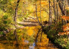Reflecting Fall Greeting Card by Mary Timman