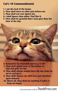 A CATS 10 COMMANDMENTS.