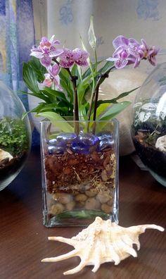 и4 Orchid Plant Care, Orchid Plants, Orchids, Orchid Terrarium, Decoration, Glass Vase, Succulents, Crafty, Creative