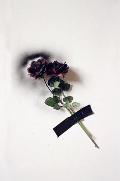 from black rose - aurelien arbet & jeremie egry