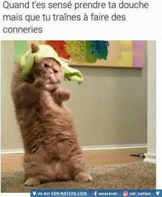 New Funny Cats Memes Posts Ideas Funny Cat Memes, Funny Tweets, Funny Cats, Funny Animals, Hilarious, Animal Jokes, Joel Osteen, Funny Text Messages, Funny Stories