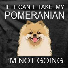 Se eu não puder levar meu Pomerânia eu nem vou