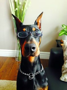 """Click visit site and Check out Cool """"Dobermann"""" Shirts. This website is outstanding. Tip: You can search """"your name"""" or """"your favorite shirts"""" at search bar on the top."""