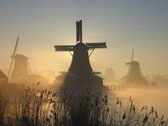 As Dutch as it gets (via #spinpicks)