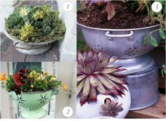 Vintage colanders make perfect planters with built in drainage!