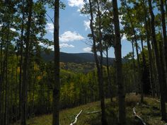 Aspen hillside  Photographer: Polly Holyoke