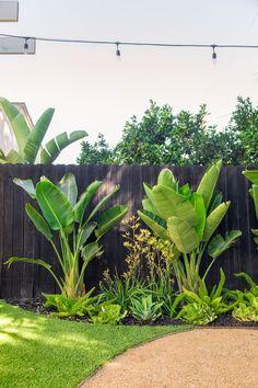 Tropical Backyard Landscaping, Landscaping Along Fence, Tropical Garden Design, Backyard Plants, Small Backyard Design, Backyard Fences, Backyard Pools, Backyard Ideas, Small Tropical Gardens