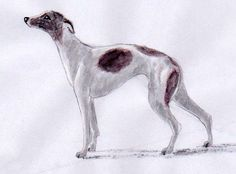 How to draw dogs from a photo and easily create dog sketches.