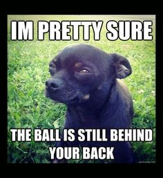 My chihuahua ran away he used to do this to my step dad lol and :-( Funny Animal Pictures, Cute Funny Animals, Funny Cute, Funny Photos, Funny Dogs, Funny Chihuahua, That's Hilarious, Silly Dogs, Funny Farm