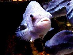 Jemina Staalon Veden vuosi 2: Akvaariossa: kaloja ja ilmeitä