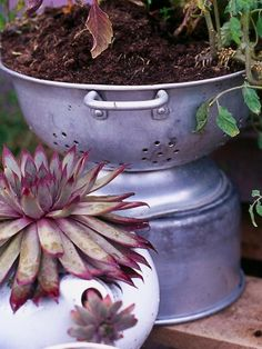 A Pot, a Teakettle and Colander Walk Into a Bar ...Actually, they walked into the potting shed and came back out as container gardens. The colander has the advantage, as it already had drainage holes.