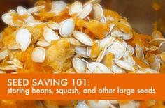 Seed-Saving 101: Storing Beans, Squash, and Other Large Seeds | Inhabitat - Sustainable Design Innovation, Eco Architecture, Green Building