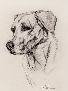 Labrador Graphite Drawing by JoshWestBurnhamArt on Etsy – Drawing Techniques Puppy Drawing, Cat Drawing, Drawing Sketches, Painting & Drawing, Pencil Drawings Of Animals, Animal Sketches, Amazing Drawings, Realistic Drawings, Still Life Drawing