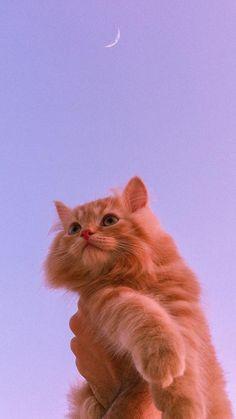 Cute Cat Memes, Funny Cute Cats, Cute Baby Cats, Cute Cats And Dogs, Kittens Cutest, Cute Babies, Cute Patterns Wallpaper, Cute Wallpaper Backgrounds, Wallpaper Iphone Cute