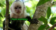 I love monkeys there so cute