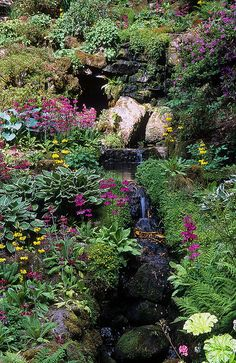 Bodnant Gardens, Conwy, Wales, UK | Luxuriant planting around a small stream – hostas, candelabra primula, ferns and water side plants...